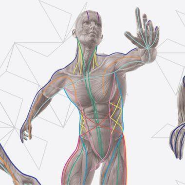 O papel do sistema miofascial no controle postural estático e dinâmico